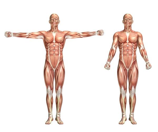 Gengibre e Dor Muscular